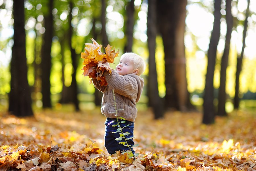 toddler picking up autumn leaves